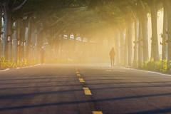 沐浴晨光 (hosihane) Tags: 台灣 屏東縣潮州鎮 步道 健走步道 光 陽光 斜射光 光影 light sunset 行道樹 sony a77 tree