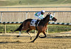 "2017-12-26 (40) r4 Steve Hamilton on #2 Cobh (JLeeFleenor) Tags: photos photography maryland md horse jockey جُوكِي ""赛马骑师"" jinete ""競馬騎手"" dżokej jocheu คนขี่ม้าแข่ง jóquei žokej kilparatsastaja rennreiter fantino ""경마 기수"" жокей jokey người horses thoroughbreds equine equestrian cheval cavalo cavallo cavall caballo pferd paard perd hevonen hest hestur cal kon konj beygir capall ceffyl cuddy yarraman faras alogo soos kuda uma pfeerd koin حصان кон 马 häst άλογο סוס घोड़ा 馬 koń лошадь laurelpark marylandraces races outdoors outside winter cold"