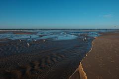 Marée basse à Wissant