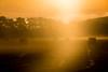 Bales thro' the mist (Briantc) Tags: scotland perthandkinross kinrosshire bales sunlight mist misty