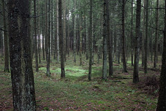 Woods, Bastogne (Riverman___) Tags: belgium ardennes hiking battle bulge noville recogne foy war 101st airborne
