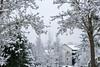 Standing together (Uday Pratti) Tags: whitechristmas winter snowed redmondwa snow
