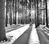 Elks Pine Woods (Dalliance with Light (Andy Farmer)) Tags: nature shadows sunstar woods landscape winter cold forest nj eastbrunswick monochrome trees bw pines elkspinewoods snow northbrunswicktownship newjersey unitedstates us