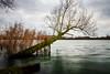 Tree in the sea (SM_WZ) Tags: clouds deutschland germany hessen wetterau wolken baum lake see tree water woelfersheim wölfersheim