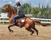 Paris Fair - Barrel Racing 44 (2.5 Million + views!!! Thank you!!!) Tags: canon eos 70d 70200mm ef70200f4l psp2018 paintshoppro2018 paris ontario canada fair barrelracing sport action horses horse efex topaz
