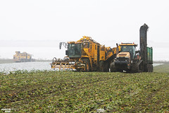 Sugar Beet Harvest XXL | ROPA // CHALLENGER // HAWE (martin_king.photo) Tags: sugarbeetharvest sugarbeet harvest sugarbeetfieldtransfertrailer ropaeurotigerv83 ropaeurotigerv84 challengermt875b tractractor haweruw4000 sugar beet field transfer trailer ropaeurotiger white snow whitefield sugarbeetharvester sugarbeetharvestxxl ropa ropatiger cold coldday workeveryday tschechischerepublik powerfull martinkingphoto machines strong agricultural greatday great czechrepublic welovefarming agriculturalmachinery farm workday working modernagriculture landwirtschaft machine machinery winter winterwork sugarbeetcampaign2017 campaign sugarbeetcampaign