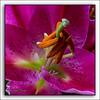 Lelie (Hans van Bockel) Tags: cameraconnectcontrol 105mm app bloemen d7200 indoor macro natuur nikkor nikon s6 samsung statief vaas vanguard focusstacking