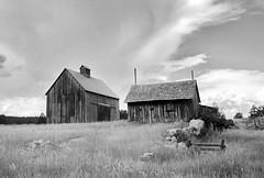 Ghost Farm (nelhiebelv) Tags: barn monochrome farm vacant