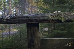 Sjuenda Naturreservat #1-2 (George The Photographer) Tags: autumn höst sweden södermanland forrest wood skylt svamp mushroom sjuendareservatet naturreservat mossa lavar rutten se