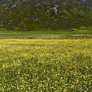 Machair abstract