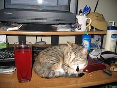 Twix (lorablong) Tags: twix cat pet california westhollywood