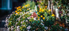 ILCE-7M2-06433-20171221-0955-Pano // Konica Hexanon AR 57mm 1:1.4 (Early Version) (Otattemita) Tags: 57mmf14 bokehpanorama bokehrama brenizermethod florafauna hexanon konica konicahexanonar57mmf14earlyversion fauna flora flower nature plant wildlife konicahexanonar57mm114earlyversion sony sonyilce7m2 ilce7m2 57mm cnaturalbnatural ota