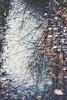 seeing the world through my eyes (***étoile filante***) Tags: reflection spiegelung puddle pfütze water wasser laub leaves blätter tree baum trees bäume nature natur emotions expressive way weg