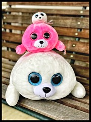 Day 357 Seal family (Dragon Weaver) Tags: ty stuffed seal animal oy toy 2017 1223 dec pad