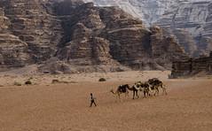 Jordan:  Trekking Across Wadi Rum (doug-craig) Tags: asia jordan wadirum camels bedouin travel stock nikon d7000 nationalgeographic desert journalism photojournalism culture dougcraigphotography flickrtravelaward greatphotographers legacy pinnaclephotography