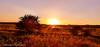 Sunset by the River (Francesco Impellizzeri) Tags: brighton england uk sunset panasonic landscape trees ngc