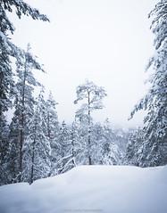 Winter. (laurilehtophotography) Tags: 2017 kanavuori jyväskylä talvi suomi finland nikon d610 sigma 20mm f14 nature landscape mountain forest trees snow outdoor amazing europe