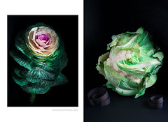 Cabbage flower on dark background, cawliflower with rolled paper (foodfulife) Tags: cabbageflower cauliflower creative stilllife lowkey awardwinningphotography beautifullight colours colors food foodphotography vertical rolledpaper blackbackground blackpaper artistic print fineart pink green intense beautiful crisp sharp delicate studiolighting professional unusual flowerphotography