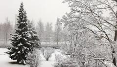 Winter (lindakoskinen) Tags: finland espoo snow