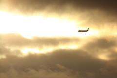 Fly away (Teruhide Tomori) Tags: japanairlines boeing777 airplane aircraft osakainternationalairport landing itamiairport japan 大阪国際空港 伊丹空港 日本航空 jal sky sunset clouds jet plane