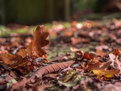 LR London 2017-300139 (hunbille) Tags: birgittelondonoktober20172lr london england nunhead cemetery magnificentseven magnificent seven victorian autumn fall allsaintscemetery all saints leaf leaves ground challengeyouwinner