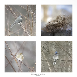 Nesting the Collage
