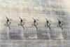Chinook parking #2 (Luftknipser) Tags: katterbachkaserne deutschland renemuehlmeier landschaft ansbachairfield land ansbach luftbild bayern mittelfranken boeingch47chinook aerial airpicture by deu fotohttprenemuehlmeierde germany luftaufnahme mailrebaergmxde middlefranconia bavaria landsart landscape vonoben