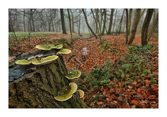Liesbos Breda (cees van gastel) Tags: ceesvangastel canoneos550d autumn herfst bomen trees liesbos breda liesbosbreda herfstkleuren autumncolours natuur nature landscape landschap noordbrabant nederland netherlands