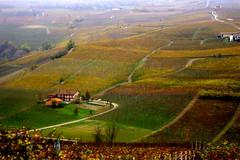 Vineyards of Barolo (annalisabianchetti) Tags: barolo vineyards vigneti paesaggio landscapes colors autumn autunno langhe piemonte rural farm houses