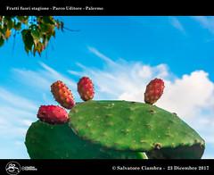 995_D8B_9073_bis_Parco_Uditore (Vater_fotografo) Tags: palermo sicilia italia it fichidindia ciambra clubitnikon cielo controluce vaterfotografo salvatoreciambra frutta