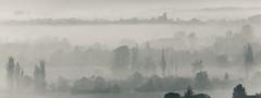 Dream (Jean-Luc Peluchon) Tags: brouillard brume paysage arbre matin fog mist nb noiretblanc bw fz1000 lumix météo tableau nuage cloud