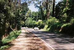 Mount Dandenong Tourist Road (Matthew Paul Argall) Tags: beirettevsn fujicolor100 100speedfilm 100isofilm road street mountdandenong mountdandenongtouristroad guessfocusing yarraranges forest