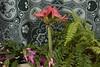 XX20171222a6844.jpg (rachelgreenbelt) Tags: monocots usa familycactaceae orderasparagales zygocactus americas eudicots ordercaryophyllales midatlanticregion colormulti northamerica zygocactuspink greenbelt maryland schlumbergeraall ghigreenbelthomesinc cactaceae cactaceaefamily magnoliophyta pteridophyta pteridophytadivision amaryllis asparagales familyamaryllidaceae fernsandhorsetails floweringplants irides mixedcolors monocotyledons multiplecolors spermatophytes tracheophytes ferngroup fernunidentified hippeastrummontecarlo2017
