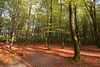 Surprising forest (Jessie van Weert) Tags: wonderful wideangle warm wide wolken explore extreme extreem trees tree yellow dynamic mysterious dynamisch day uitzicht outdoor outside sun sunshine interesting impressive incredible nikon d3100 nice light field photography plant plants adorable atmosphere staatsbosbeheer sigma depthoffield depth dof flickr fotografie fabulous gorgeous green groothoek holland bijzonder landscape landschap licht zon view veld beautiful blue netherlands nature ngc natuur natuurgebied natuurmonumenten magical sky heide heath grass forest park autumn herfst bos wood road trail leaf