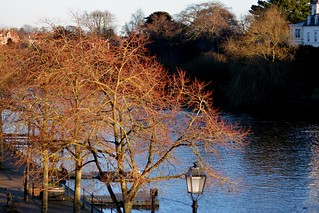 Through The Trees River Dee Chester Jan 7Th 2018
