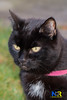 Cat (Nikon Ranger) Tags: pussy pussycat blackpussy blackpussycat female flash nikond800e