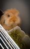 Don Anselmo (Hornet 18) Tags: donanselmo bunny conejo belier pet
