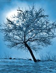 Frozen Fog - Wallowa County - Oregon (Electric Crayon) Tags: tree frost snow frozenfog pacificnorthwest oregon easternoregon wallowacounty wallowalake usa unitedstates america rural outdoors electriccrayon patrickmcmanus