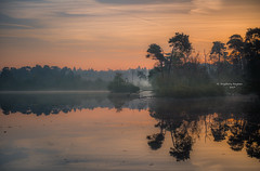 Banners of nature III (Ingeborg Ruyken) Tags: dropbox autumn zonsopkomst sunrise dawn oisterwijksevennen fall flickr herfst ochtend trees rayoflight 2017 bomen oktober 500pxs natuurfotografie fog morning october mist