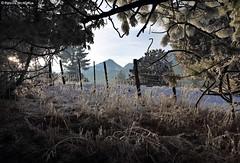 Frozen Fog - Eastern Oregon (Electric Crayon) Tags: snow ice frozenfog pacificnorthwest oregon easternoregon wallowacounty mountains countryside usa unitedstates america rural outdoors electriccrayon patrickmcmanus