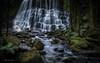 Nelson Falls (Bradley Grove) Tags: green nature rocks water cascade fern flow jungle lush rainforest tasmania waterfall