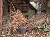 Kutscherhaus und Garten 10 (Moddersonne) Tags: lost place urbex verlassen abandoned decay verfall urban exploration baum tanne