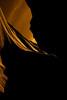 _62A8555 (gaujourfrancoise) Tags: unitedstates etatsunis gaujour americansouthwest arizona page antelopecanyonlower navajoland gorges slotcanyon scenic hasdestwazi hazdistazí yellow jaune