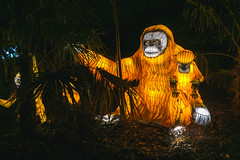 Wild Lights (Strangelove 1981) Tags: 2017 dublinzoo ireland wildlights zoo night lights glow light animals festival orangutan ape orange