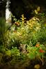 Piper in the Garden (Jen MacNeill) Tags: cat cats feline kitty kitties pet animal garden gardens pets flowers cute littledoglaughedstories