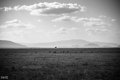 Land (fabecollage) Tags: landscape paysage savane bnwphotography bnwphoto bnw fabecollage kenya tsavoeast 2017 sky montains blackandwhite
