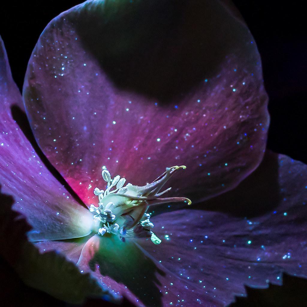 UV Florescence Flower