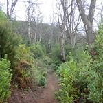 La Gomera (Spain's Canary Islands) - Parque Nacional de Garajonay: on a trail in the Laurel rain forest thumbnail