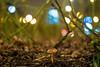 Meyer-Optik Gorlitz Trioplan 50 mm f/ 2.9 V - DSCF3568 (::nicolas ferrand simonnot::) Tags: meyeroptik gorlitz trioplan 50 mm f 29 v 50s | 12 blades aperture exakta paris 2018 classic prime lens profondeur de champ effet fungus mushroom macro bois oiseau animal arbre flou bokeh depth field color night public light rose green yellow orange blue red pink purple vintage manual ciel german