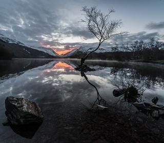 Llyn Padarn Lone Tree